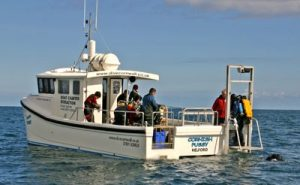 Image of Cornish Pussy - a Dive Boat