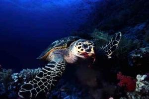 turtlea